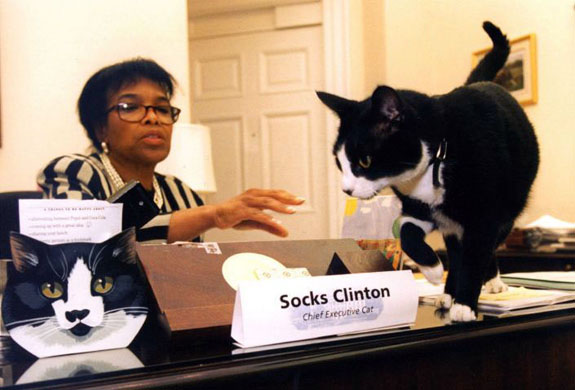 File:Socksclintonchiefexecutivecat.jpg