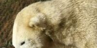 Name The Polar Bear Cub/Nuremberg