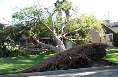 File:UprootedTree.jpg