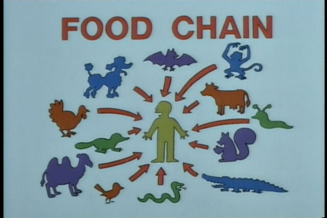 File:Food chain.jpg