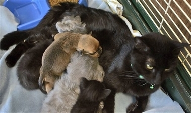 File:MotherCatAdoptsPuppy.jpg