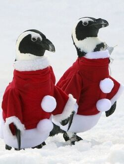 PenguinSantaSuits