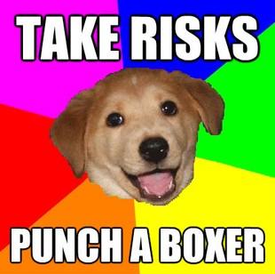 File:Advicedog6.jpg