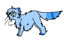 Ash Kitty