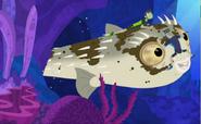 Blowfish.020
