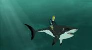 Martin on Shark