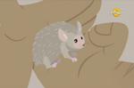 Hedgehog Tenrec