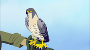 Falcon doing Nothing