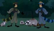 Racoon Power