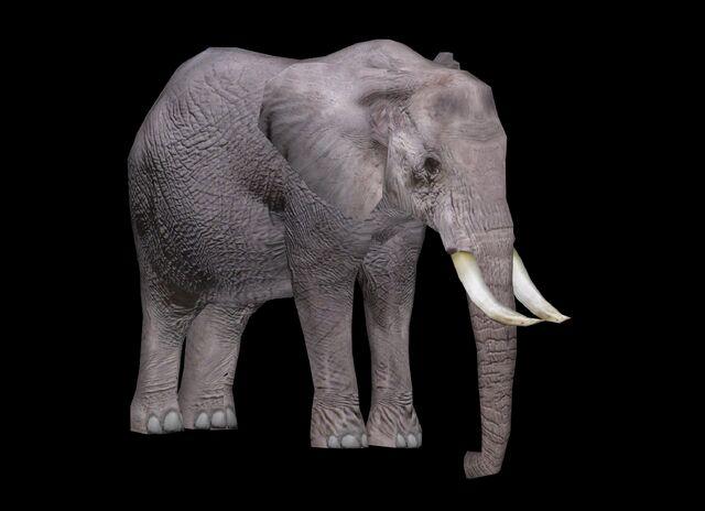 File:African Elephant WP2 Profile.jpg
