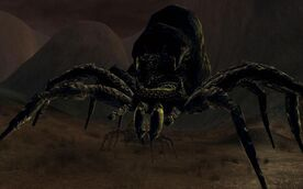 Gaping-spider