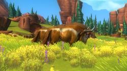 Longhorn cow1