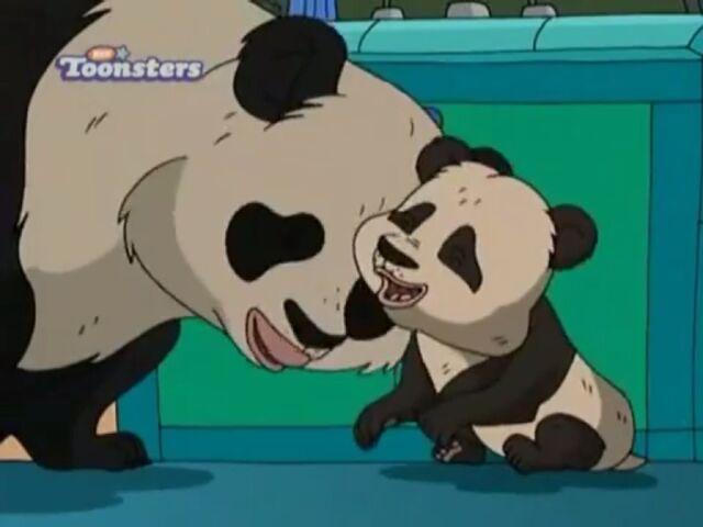 File:Pandas.JPG