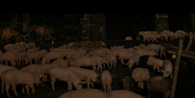 File:Pigs.png