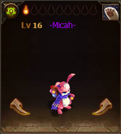 Pets Micah Star1