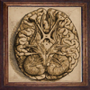 Decorative Painting brain