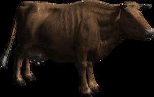 Marguerite, la vache de concours