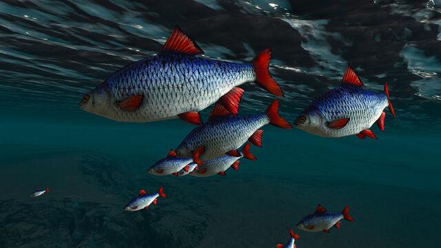 File:Fish of Skellige.jpg