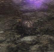 Hide Beetle