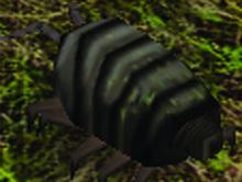 1meatbug