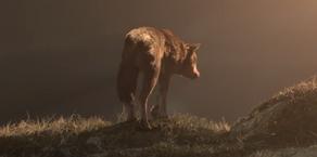 WB Wolf 73