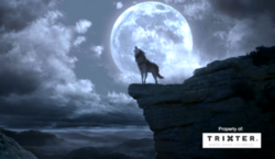 WB Wolf 29