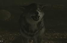 WB Wolf 18