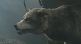 WB Wolf 17