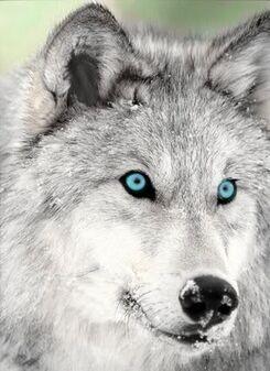 Mistythewolf