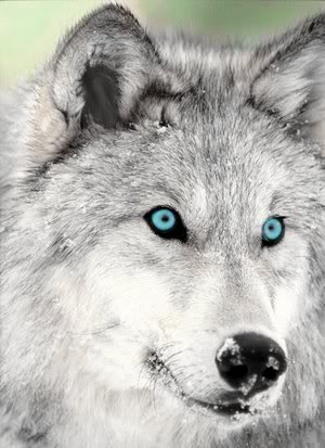 File:Mistythewolf.jpg