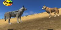 Dispersal wolf (2.5)