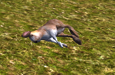 File:Hare carcass.png