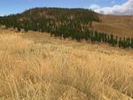 Amethyst Mountain WQscreenshot (update)