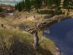LR beaver dam
