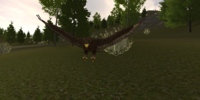 Golden Eagle (2.7)