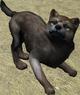 Pup browngrey