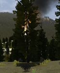 Burning tree (2.7)
