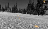 Elk-footprint scent