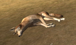 File:Coyote carcass.png