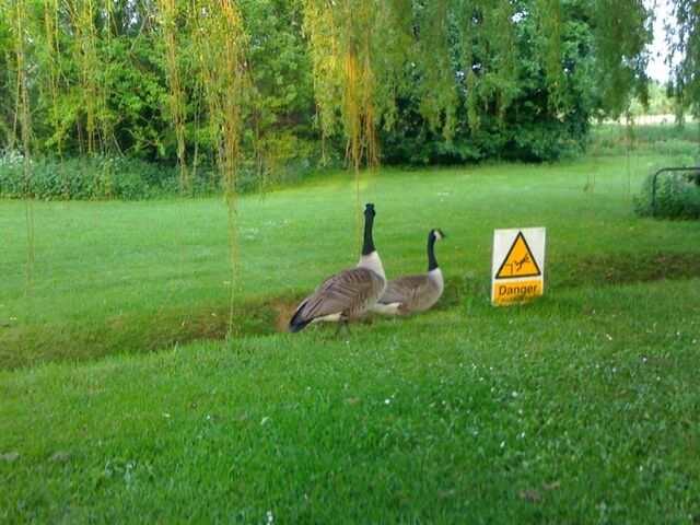 File:Lawn.jpg