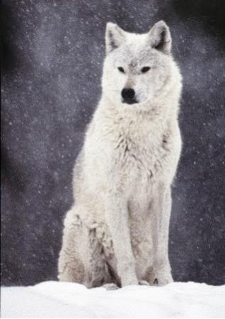 File:Onepeaceweleyswolfform.jpg