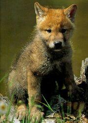 Wolfpup