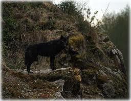 Aawolf3