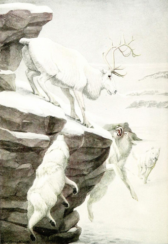 File:414px-The Larger Mammals of North America - Reindeer & Wolves.png