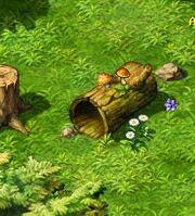 Mushroom Loc1