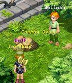 Common Grass 4