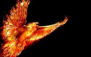 Phoenix Rysdei