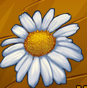 Collection-Camomile