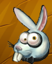Collection-Rabbit Head