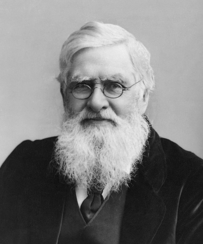 File:Alfred Wallace.png
